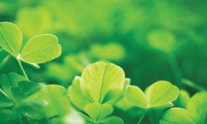 Actueel: Meer milieueffectenrapporten voor Wallonië